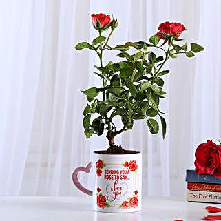 Rose Plant In White Ceramic Pot: Rose Plant Gifts