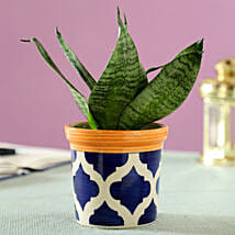 Sansevieria Plant in Blue Ceramic Pot: Buy Air Purifying Plants