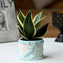 Sansevieria Plant in Ship Pot: Plants Delivery