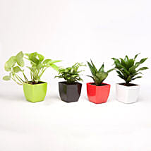 Foliage & Air Purifying Plant Set: Send Plants with Same Day Delivery