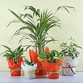Set of 5 Exotic Green Plants: