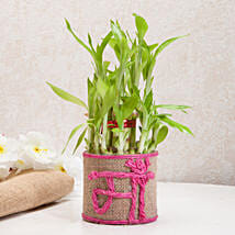 Sincerely Yours Mom Lucky Bamboo Plant: Birthday Gifts for Mom