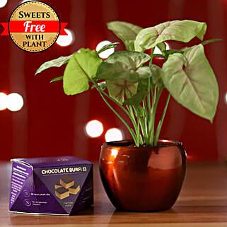 Syngonium Plant & Chocolate Burfi: Send Diwali Gifts for Boss