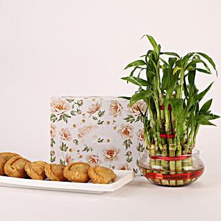 Three Layer Bamboo Plant & Gujiya Combo: Holi Gifts