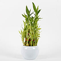 Three Layer Bamboo Plant in Orchid Metal Pot: Spiritual Plant