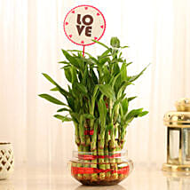 Three Layer Lucky Bamboo For Valentine's Day: Plants for birthday