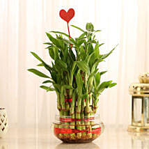 Three Layer Lucky Bamboo With Heart Shaped Tag: Plants for birthday