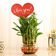 Three Layer Lucky Bamboo With I Love You Tag: Valentine Plants