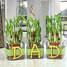 Three Lucky Bamboo Plants For Dad: Spiritual and Vastu Plants