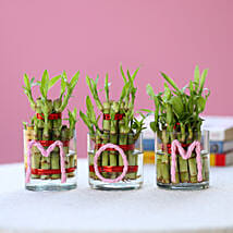 Three Lucky Bamboo Plants For Mom: Plants - Same Day Delivery