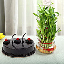 Truffle Cake N Three Layer Bamboo Plant: cakes to Sonipat