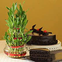 Truffle Cake N Three Layer Bamboo Plant: Plants for anniversary