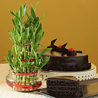 Truffle Cake N Three Layer Bamboo Plant: Cakes to Mathura