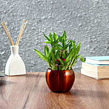 Two Layer Bamboo Plant in Brass Orchid Metal Pot: Bamboo Plants