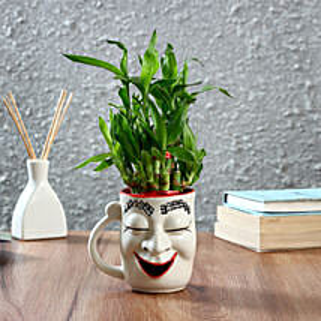 Two Layer Bamboo With Halloween Ceramic Pot: Spiritual and Vastu Plants