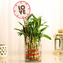 Two Layer Bamboo in Vase with Love Tag: Plants to Kolkata