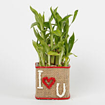Two Layer Lucky Bamboo in a Glass Vase I Love You: Buy Indoor Plants
