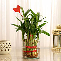 Two Layer Lucky Bamboo With Heart Shaped Tag: Plants to Bengaluru
