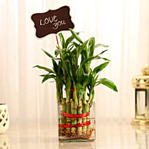 Two Layer Lucky Bamboo With Love You Tag: Send Plants for Valentines Day