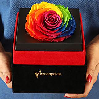 Big Forever Rainbow Rose in Black Velvet Box: Forever Rose Gift
