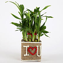 Valentine Special 2 Layer Lucky Bamboo In I Love U Vase: Send Plants to Pune
