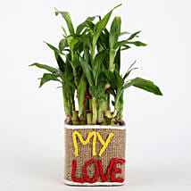 Valentine Special 2 Layer Lucky Bamboo In My Love Vase: Plants to Delhi