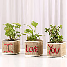 Set of 3 I Love Your Green Plants: