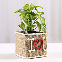 Syngonium Plant in Jute Wrapped I Love You Vase: Plants to Pune