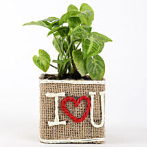 Syngonium Plant in Jute Wrapped I Love You Vase: Send Plants to Mumbai
