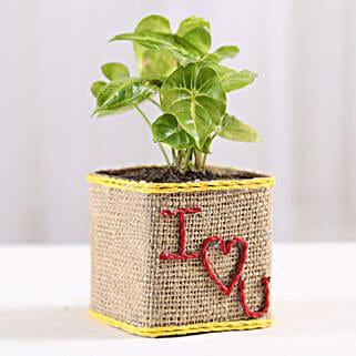 Syngonium Plant in I Love You Vase: Send Plants to Patna