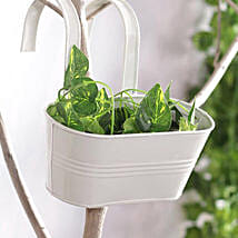 White Oval Hanging Planter: Pots and Planters