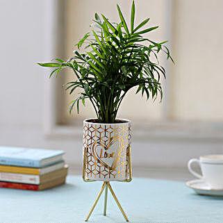 White Pot of Chamaedorea Palm: Plant Pots