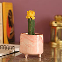 Yellow Moon Cactus In Pink Pot: Plants Delivery