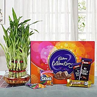 Yummy Chocolates N Three Layer Bamboo Plant: Good Luck Plants