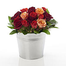 A Rosy Bucket: Roses to New Zealand