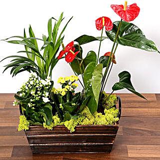 Set Of Exotic Plants In Wooden Base: Plants in UAE
