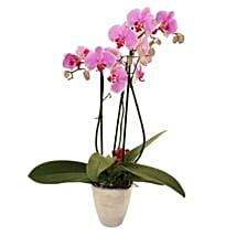 Elegant Orchid: Mother's Day Bouquet in UK