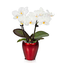 Campfire Mini Orchid: Send Corporate Gifts to USA