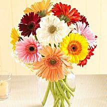 Multi Color Gerberas in Vase: Send Flowers to San Diego