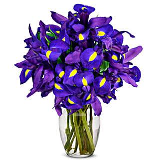 Stunning Blue Iris 10 Stems: Send Birthday Flowers to USA
